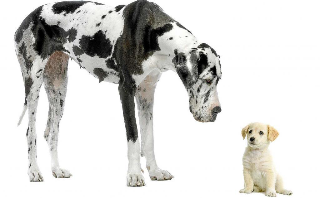 Qué hacer si mi perro va a conocer a un nuevo cachorro o a un bebé?