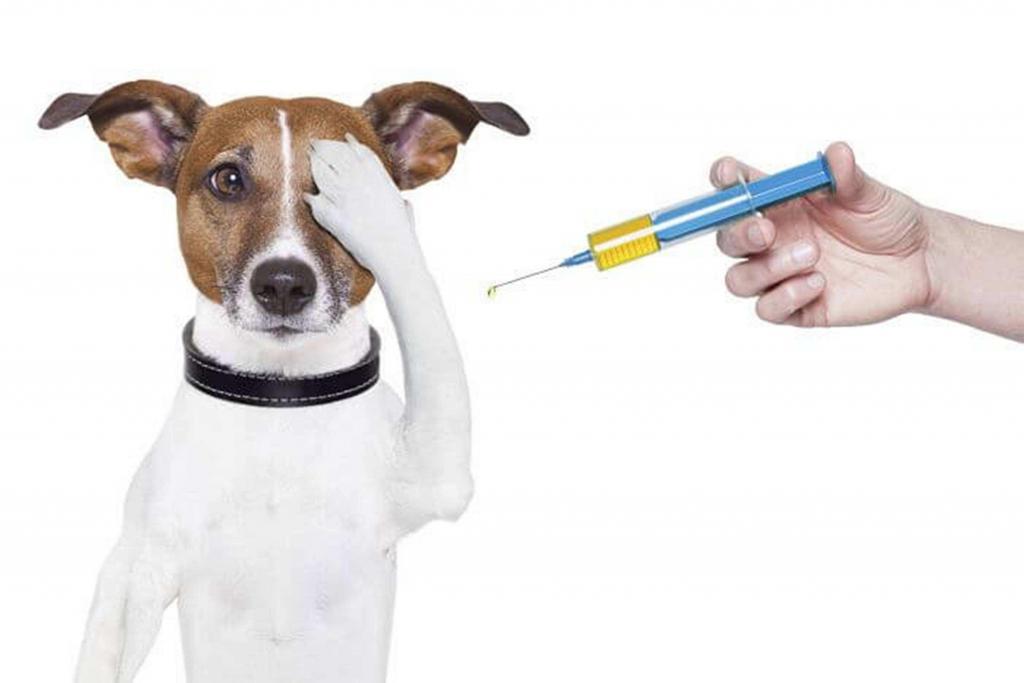 Por qué debo de vacunar a mi perro?