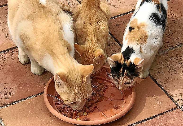 Resultado de imagen para anciana cuidando gatos en formenteras